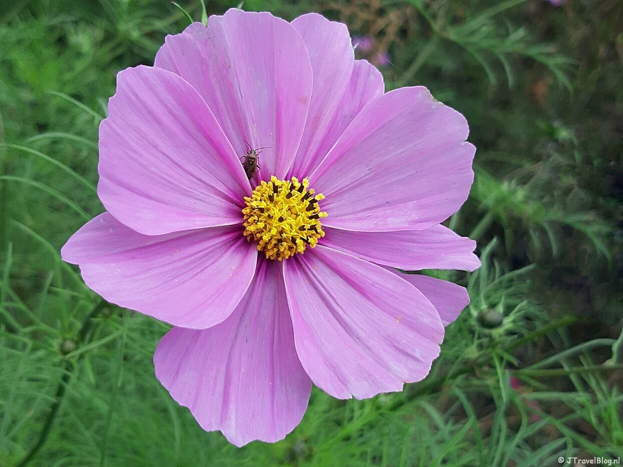 Een bloem langs de kant van de weg