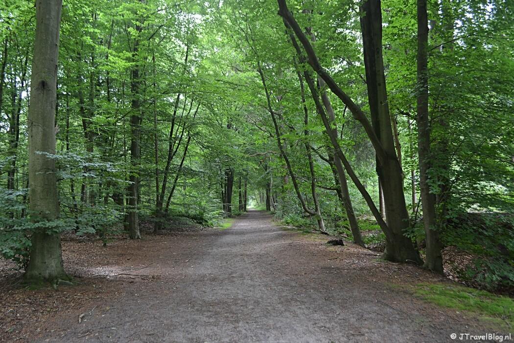 Een bospad tijdens de 7e etappe van het Westerborkpad