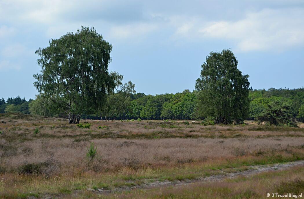 De Hoorneboegse Heide tijdens de 6e etappe van het Westerborkpad