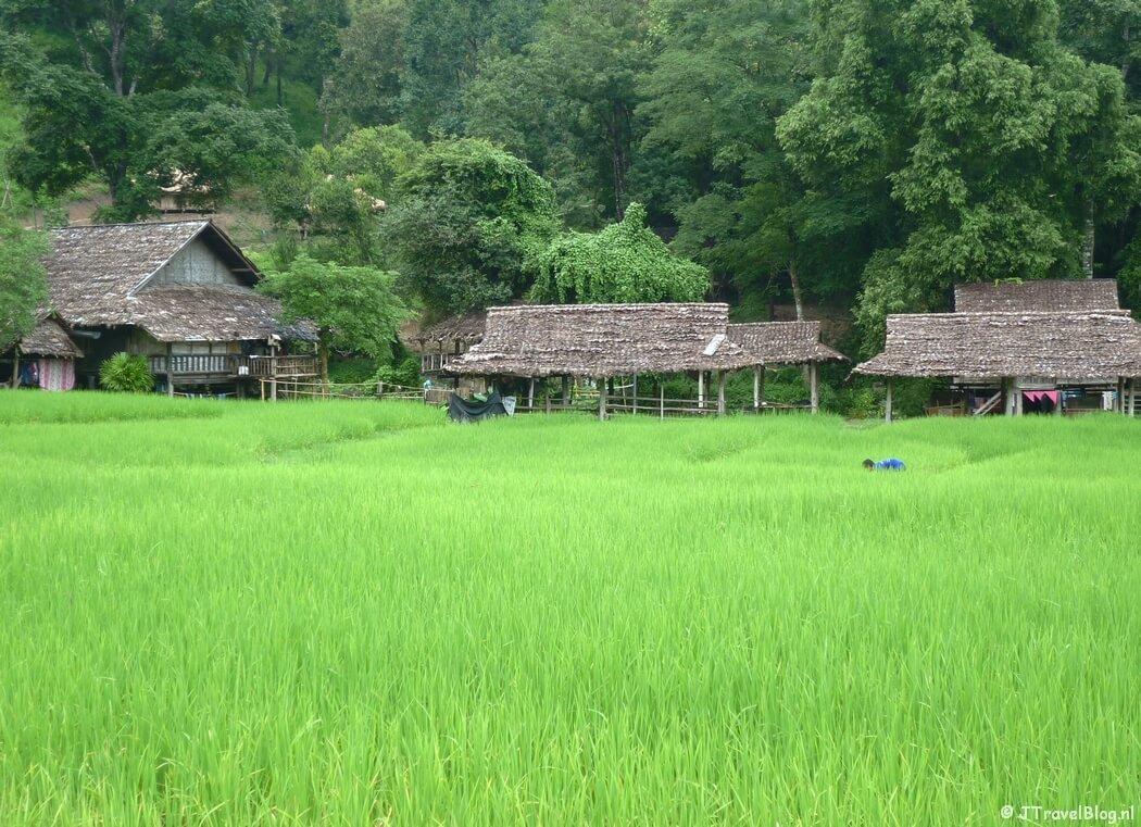 Rijstvelden onderweg in Thailand