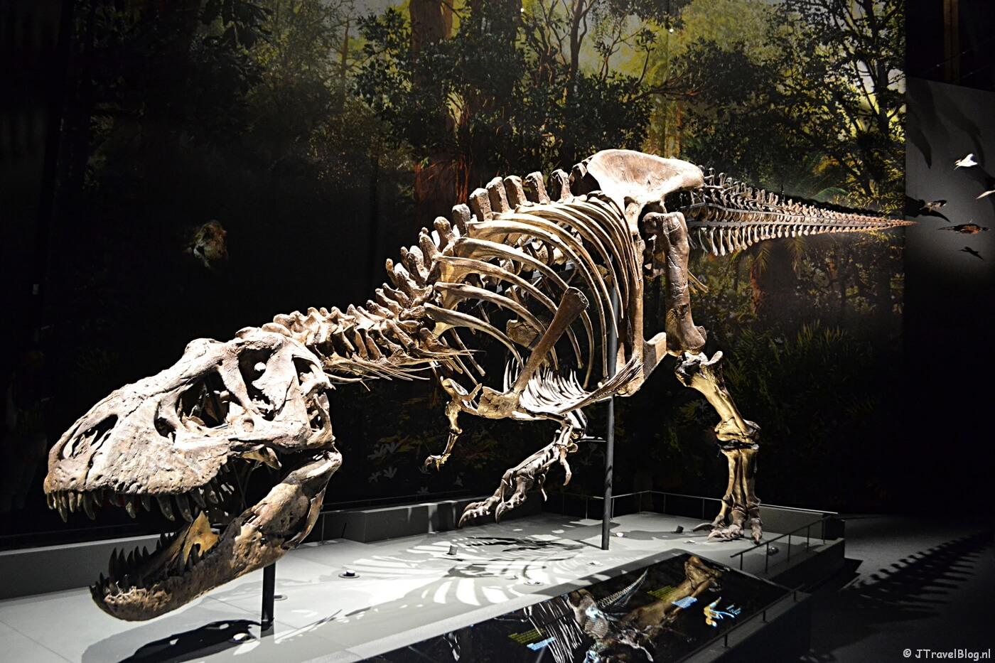 Tyrannosaurus rex, Trix in Naturalis in Leiden