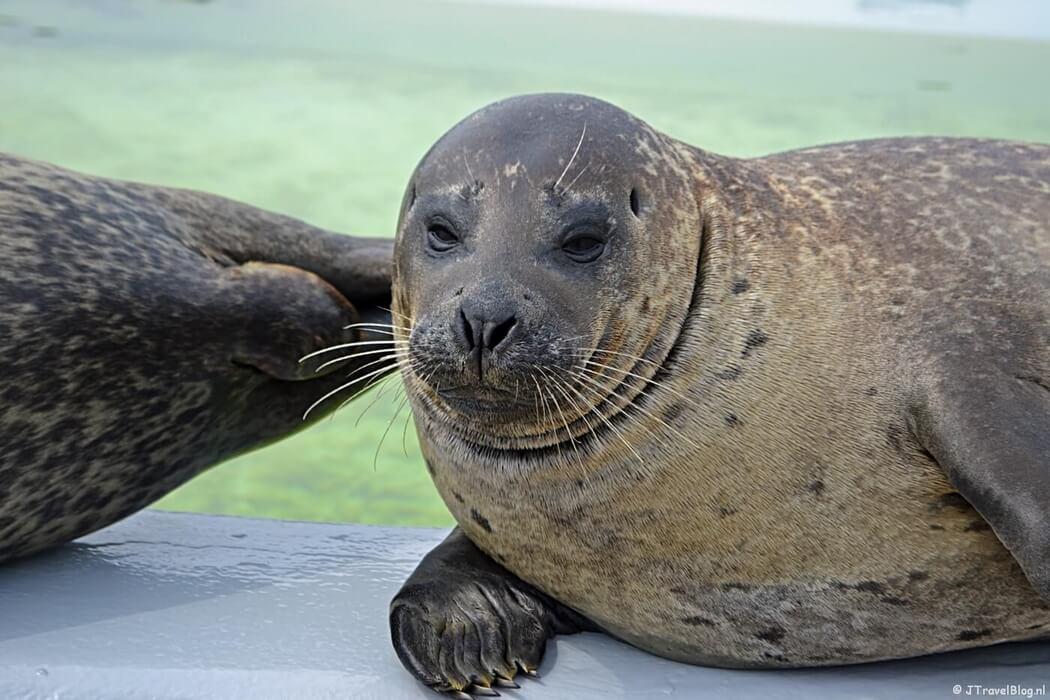 Zeehond in Ecomare in De Koog op Texel