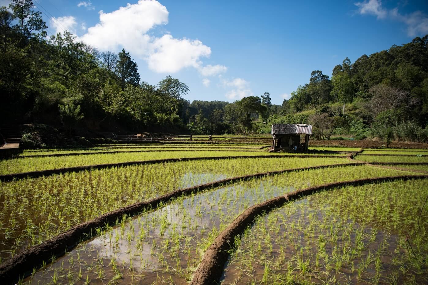 Sri Lanka Foto: Daniel Klein / Unsplash